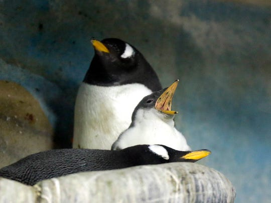 The Milwaukee County Zoo is all about mom Sunday -