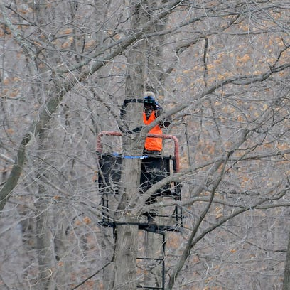 A hunter uses binoculars to scan for deer in a tree