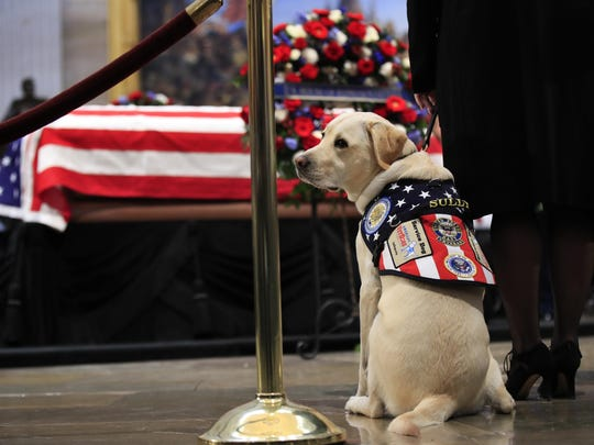 In this Dec. 4, 2018 file photo, Sully, former President George H.W. Bush's service dog, pays his respect to President Bush as he lies in state at the U.S. Capitol in Washington.
