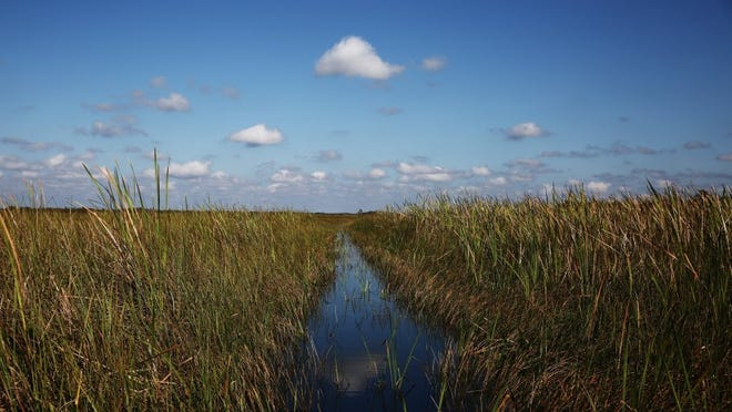 The view from an airboat in the Everglades south of I-75 and east of the Miccosukee Reservation on Sunday, Nov. 1, 2015. The Everglades are a popular destination for Collier County airboaters to fish, swim, and race airboats. (Dorothy Edwards/Staff)