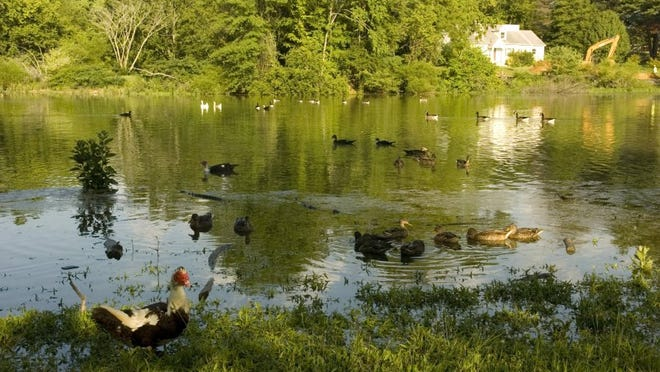 The Colonial Village duck pond is pictured in 2008 after being refilled by the Knoxville Utility Board.