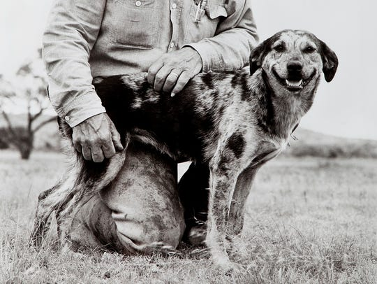"""Cattle Dog: Mookie,"" a photograph by Laura Wilson,"