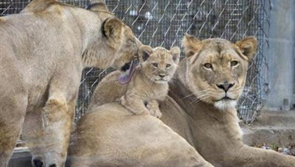 Folks itching for a peek at the Denver Zoo's newest
