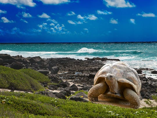 The Galapagos Islands tempt many bucket list travelers.