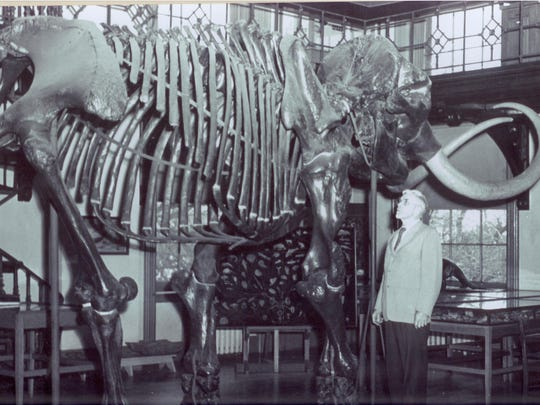 Historic photograph of the Mannington Mastodon taken in the 1960s is on display at the Rutgers Geology Museum.