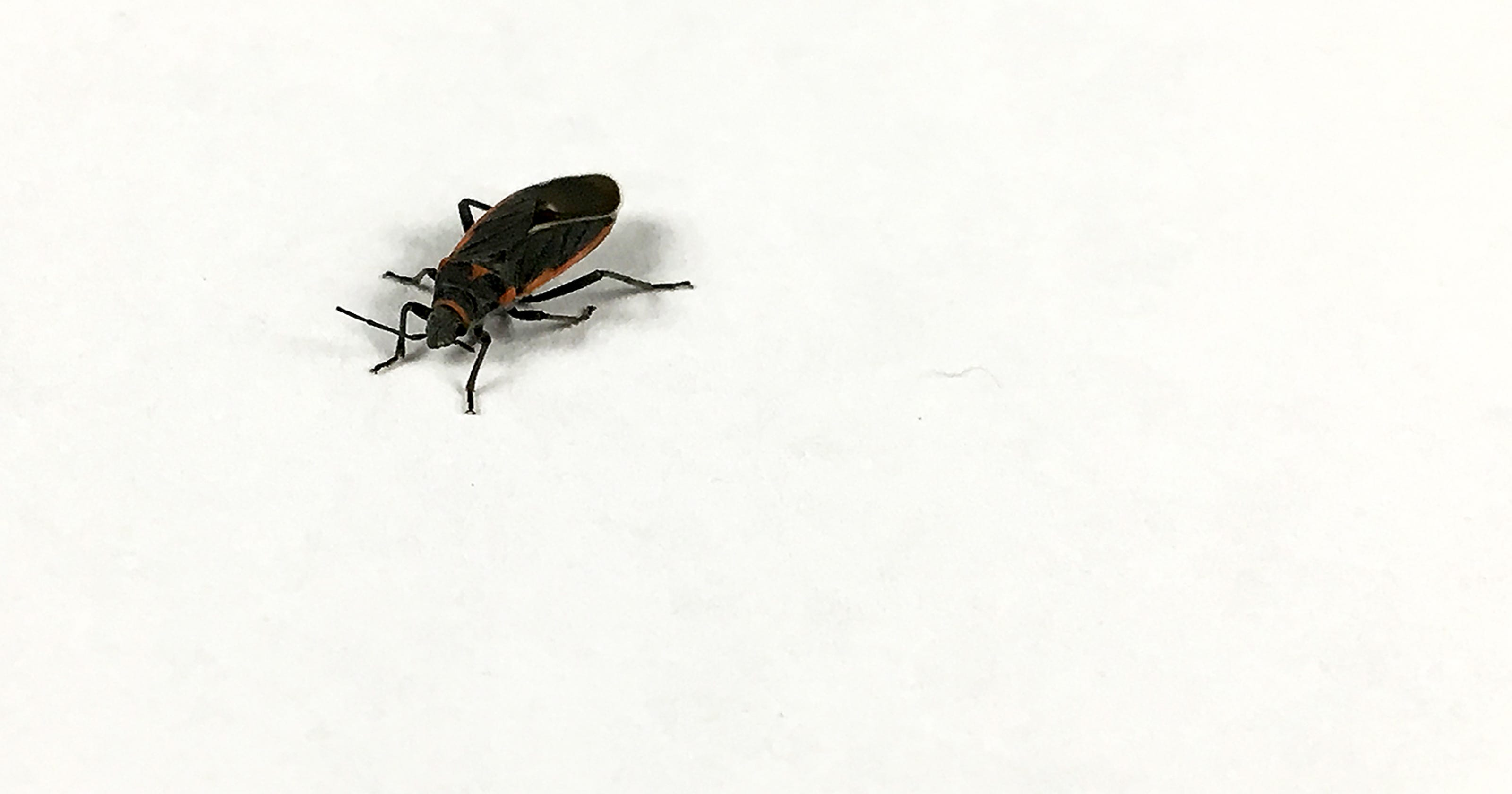 What are these black-and-red bugs?