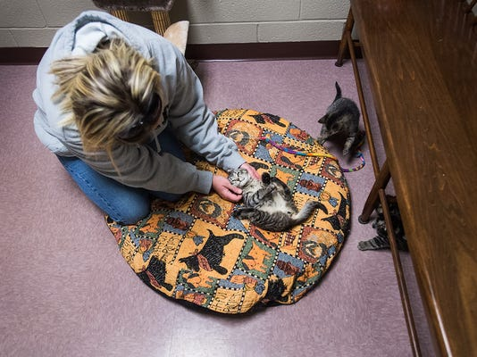 Shelter Manager Abigail Avery pets a 10-week-old kitten as she talks about the shelter's renovation progress earlier this year.