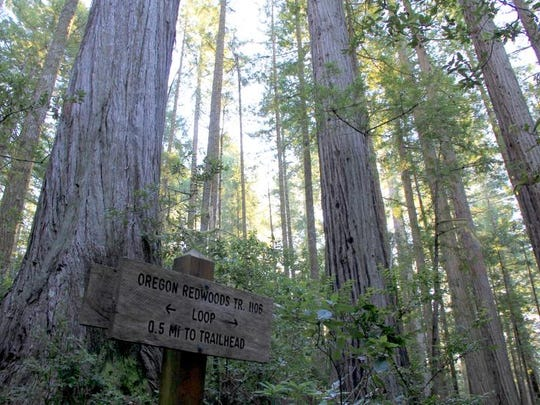 A sign points hikers through the loop of the Oregon Redwoods Trail.