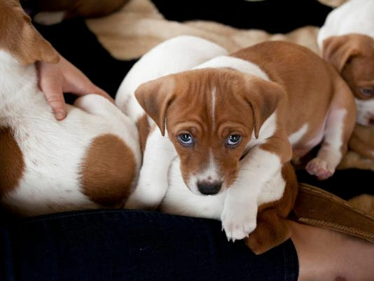 Animal Shelter-Puppies