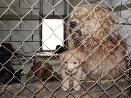 Livingston puppy mill.jpg