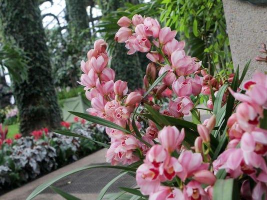 013114 wil xxx longwood orchid jc0061 (2).jpg