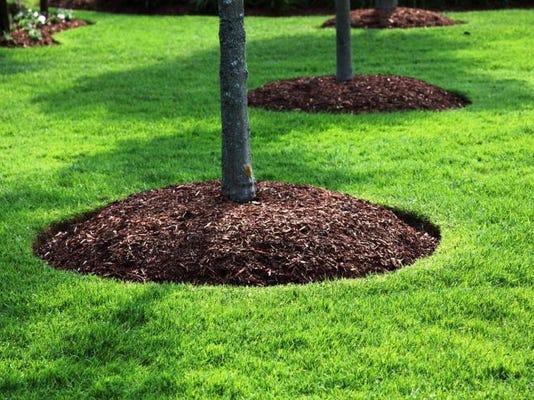 -Mulch Circles.jpg_20140424.jpg