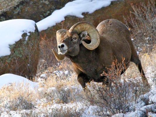 FTC0216-sp wildlife watching spots