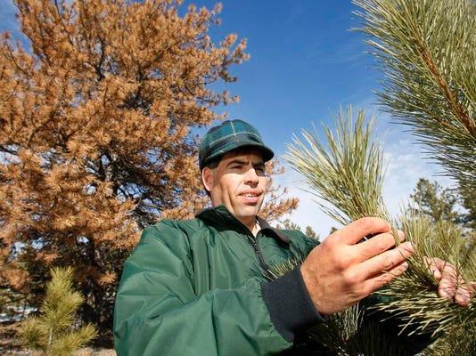 -Pine Beetles 1.jpg_20110126.jpg