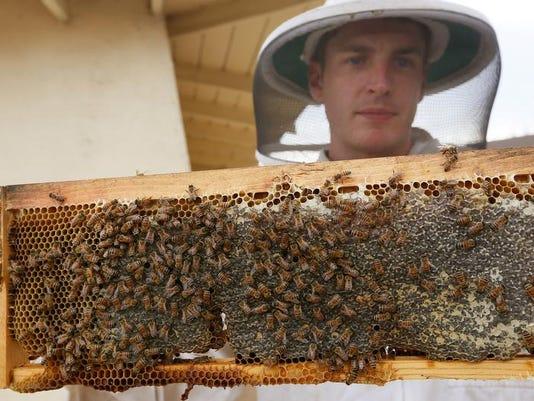 0214 bees.jpg