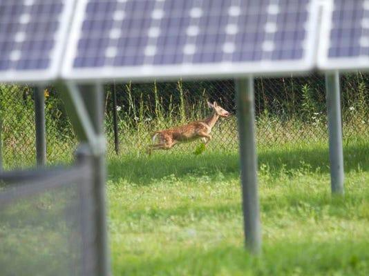 Deer rescue_01.jpg