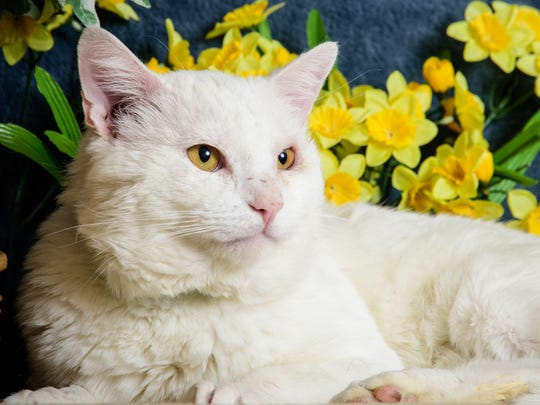 Say hello to Popcorn, a likeable, friendly fella who believes in going with the flow. Nothing gets him down! You can meet Popcorn any day of the week at Nevada Humane Society, located at 2825 Longley Lane in Reno.
