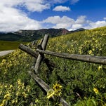 Crested Butte is known as the Colorado capital of wildflowers, and for good reason.