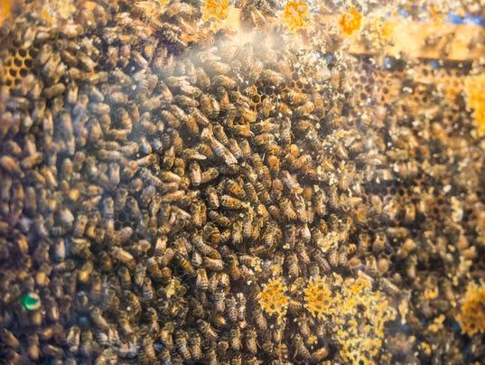 3-LDN-JML-010817-bees
