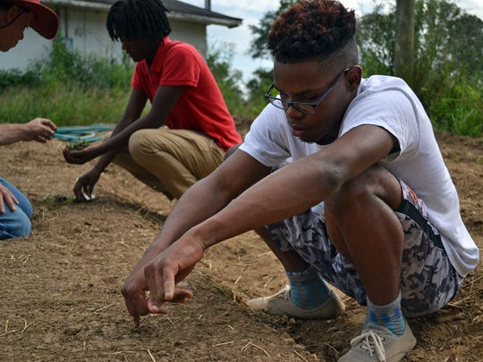 Rashawn Byrd measures the distance between cauliflower seedlings in a field behind the Mileston co-op as part of the Mileston youth-in-agriculture program in September, 2017.