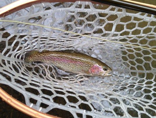 636223499788644477-LDN-TF-021217-rainbow-trout.jpg
