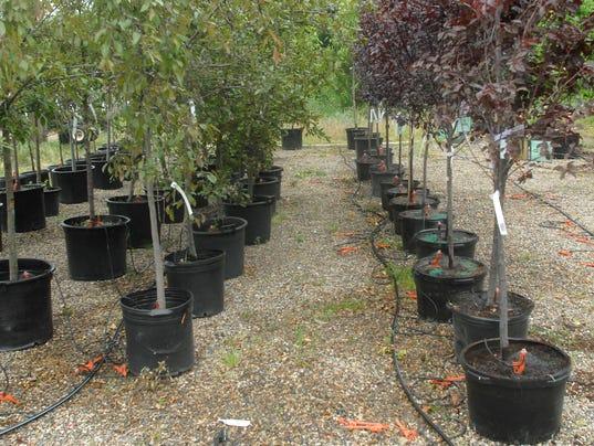 636288977496720428-trees.jpg