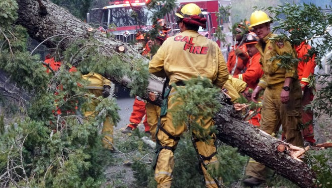 CalFire firefighters on Wednesday afternoon saw up a tree that fell across one of the roads leading to Calistoga, working frantically to clear the road in advance of a mandatory evacuation order due to wildfire danger.
