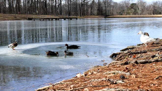 Below freezing temperatures caused the pond at Muse Park to ice over, Tuesday, Jan 2.