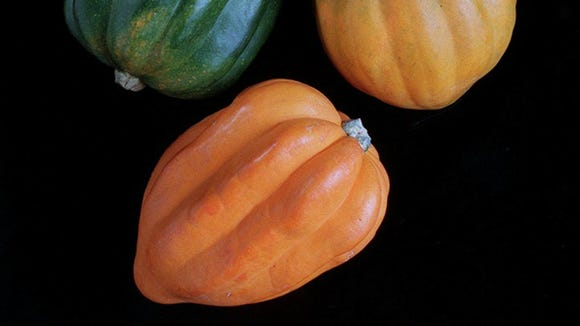 KRT FOOD STORY SLUGGED: SQUASH KRT PHOTO BY TIM DOMINICK/THE STATE (KRT4 - November 16) Winter squashes such as the acorn squash provide beta-carotene, potassium and other good-for-you nutrients. Winter squash are firmer than the summer varieties and require longer baking times. (CS) AP PL KD 1998 (Sq)