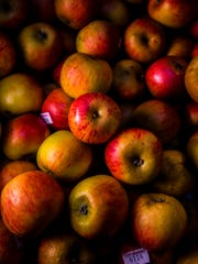 Lamb Abbey Pearmain apples, an heirloom variety from