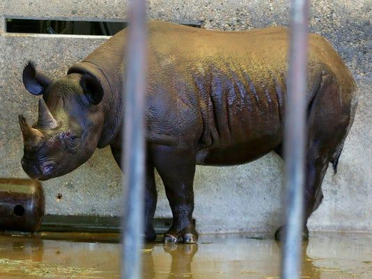rhino  03ofx nws wood