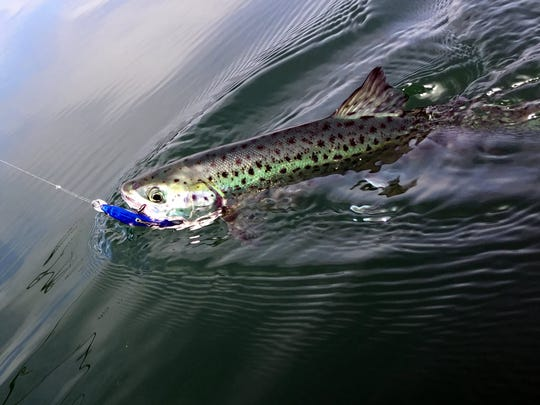 A landlocked salmon is on the hook in a New Jersey lake in this file photo.