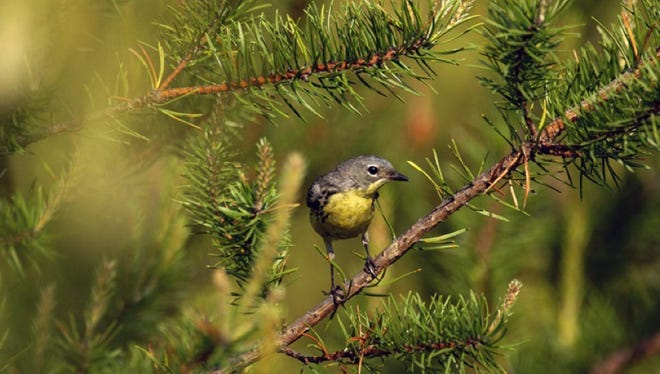 Michigan offers a vast array of viewing areas for bird-watching.