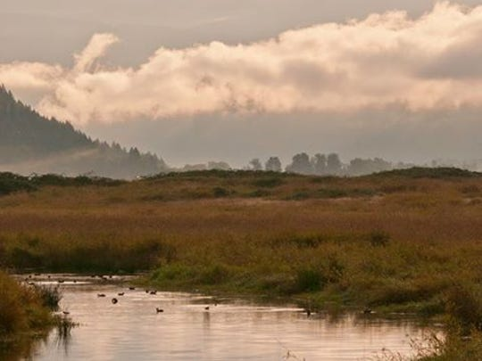 Best easy hikes in the Columbia River Gorge: Steigerwald National Wildlife Refuge.