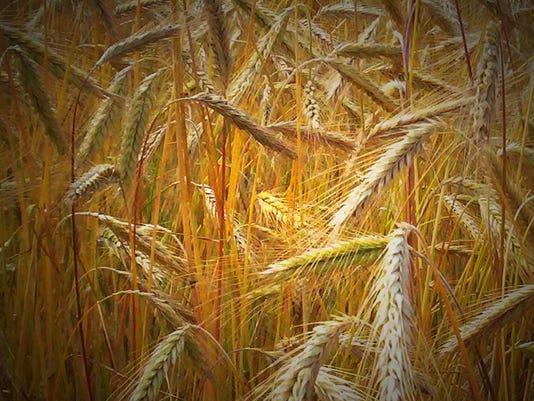 #ARNgenAbi-ag-crop.jpg