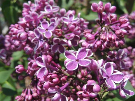 APC 2014 spring summer color purple lilacs.jpg