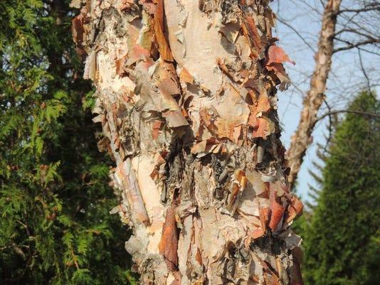 APC yard md native trees LEAD.JPG