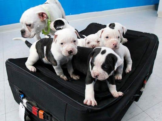 -CINBrd_04-14-2012_Enquirer_1_C001~~2012~04~13~IMG_dogs.jpg_2_1_T71A8NAC~IMG.jpg