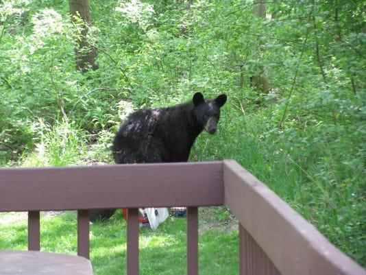Ithaca Bear