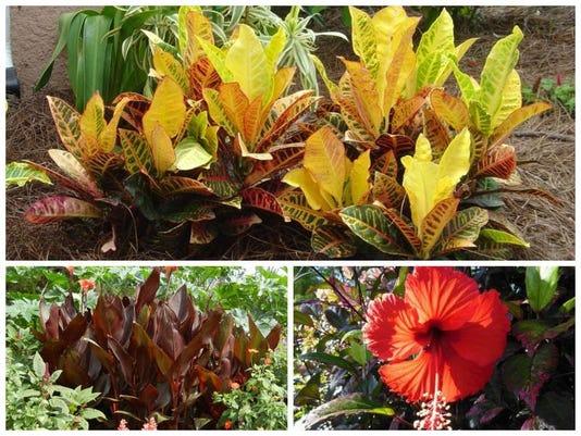 PlantingTip-0215.jpg