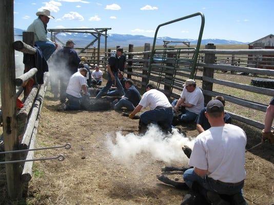 -Montana State Prison Branding 2011 011.jpg_20140408 (2).jpg