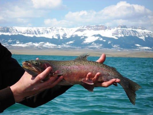 -Spring rainbow trout.jpg_20140415.jpg