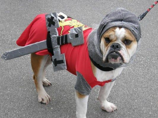 DCA 1025 canine contest.jpg