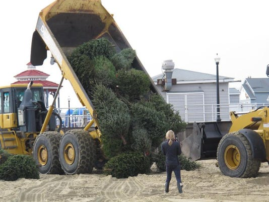 Holidays-Recycling Christmas Trees (5)