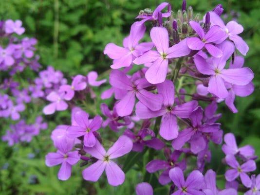 APC f FF family garden invasive species for kids.jpg