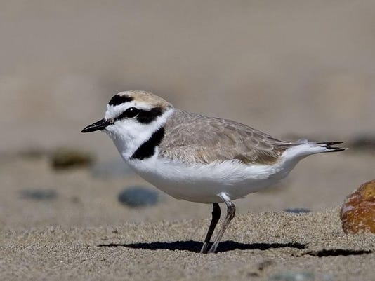 SAL0313-Plover restrictions