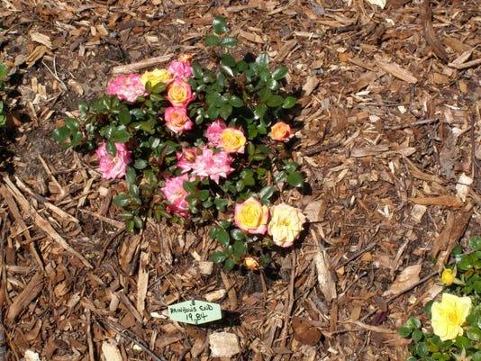 garden2011-05-21 018.jpg