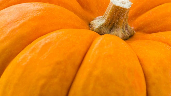 Celebrate fall with pumpkin patches, hayrides and other fall fun in Sumner County.