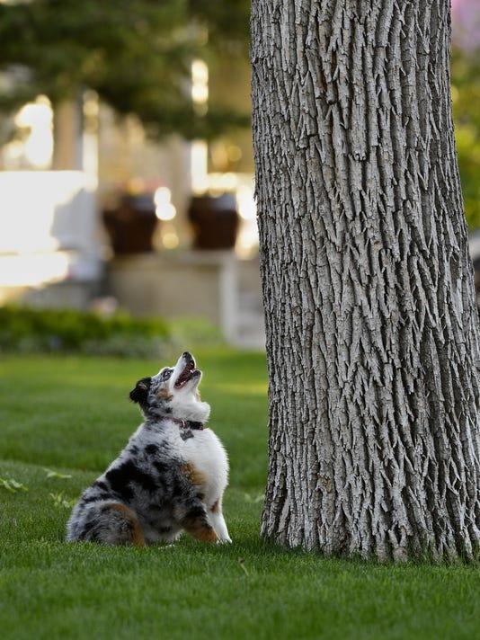 636565407302430928-05232014-Dog-Squirrel-Tree-A.jpg