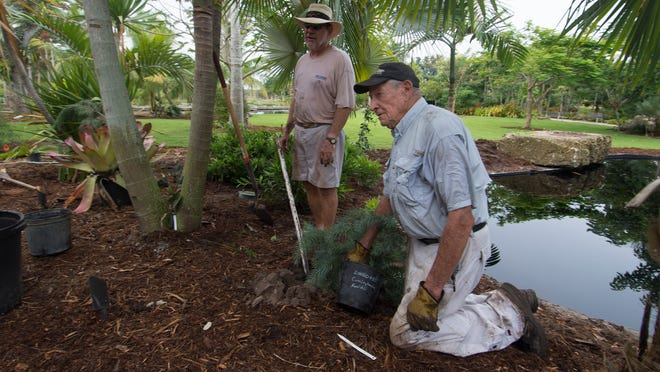 Longtime Naples Botanical Garden volunteers David Catron, left, and Harold Lampe plant trees Tuesday.